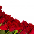 Fresh red roses border — Stock Photo