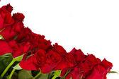 Fresh red roses border — Stock Photo