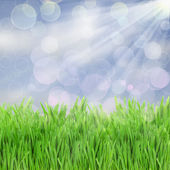 Green grass in sunny day — Stock Photo
