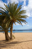 Las teresitas 海滩,特内里费岛,西班牙的棕榈树 — 图库照片