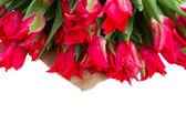 Fresh red tulips on white — Stock Photo