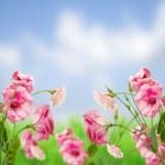Eustoma flower meadow — Stock Photo #21028773
