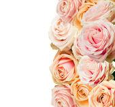 Frontera de rosas sobre fondo blanco — Foto de Stock