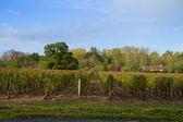 Winery yard — Stock Photo