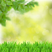 Green bokeh background — Stock Photo