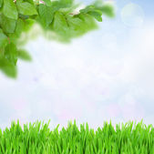 Green grass and leaves at sunny day — Stock Photo
