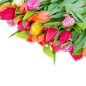 Pack of fresh tulips — Stock Photo