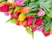Pack of fresh tulips — Stock Photo