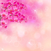 Pink orchid branches — Stock Photo