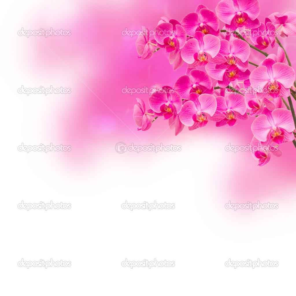 背景素材矢量图 兰花