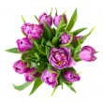Round purple tulips bouquet — Stock Photo