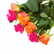 Pile of orange and pink  roses — Foto Stock