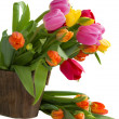 Blooming tulips — Stock Photo #22602031