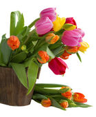 Blooming tulips — Stock Photo