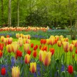 Stock Photo: Spring flowers in Keukenhof garden