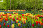 Spring flowers in Keukenhof garden — Stock Photo