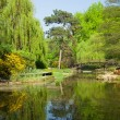 Botanic garden in summer, Wroclaw, Poland — Stock Photo