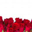 Border of fresh red garden roses — Stock Photo