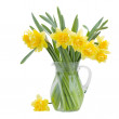 Stock Photo: Bouquet of blooming daffodils