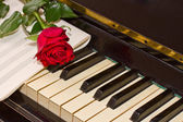 Rose with notes paper on piano — Stockfoto