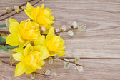 Yellow narcissus flowers with catkins — Stock Photo
