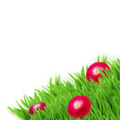 Green grass with daisy flowers border — Stock Photo