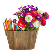 Pencils and aster flowers — Stock Photo