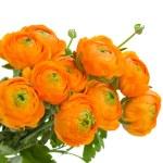 Bunch of orange ranunculus flowers — Stock Photo