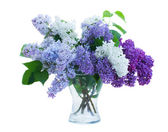 Bunch of Lilac in vase — Stock Photo