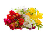 Bouquet of multicolored freesias flowers — Stock Photo