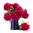 Bouquet of peonies in blue pot — Stok fotoğraf