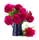Bouquet of peonies in blue pot — Stock Photo
