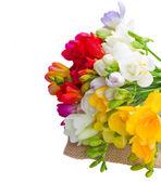 Posy of freesias flowers — Stock Photo