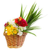 Bouquet of freesias flowers in basket — Stock Photo