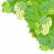 White grapes and leaves — Stock Photo