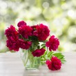 Bouquet of peonies on a garden table — Stock Photo
