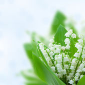 Lilly of the valley flowers — Stock Photo