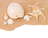 Seashells on sand border — Stock Photo