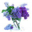 Bunch of Lilac in glass vase — Photo