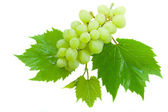 White grapes with leaves — Stock Photo