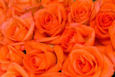 Bouquet of orange roses — Stock Photo