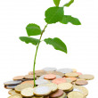 Pile of coins with sprout — Stock Photo