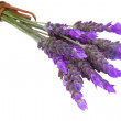 Bunch of  fresh lavender close up — Stock Photo #27750631