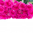 Border of fresh pink roses — Stock Photo #27823933