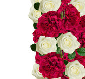 White and red roses border — Stock Photo