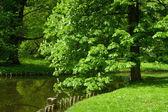 Lazenki 公園、アムステルダム — ストック写真