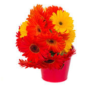 Gerbera flowers in pot — Stock Photo
