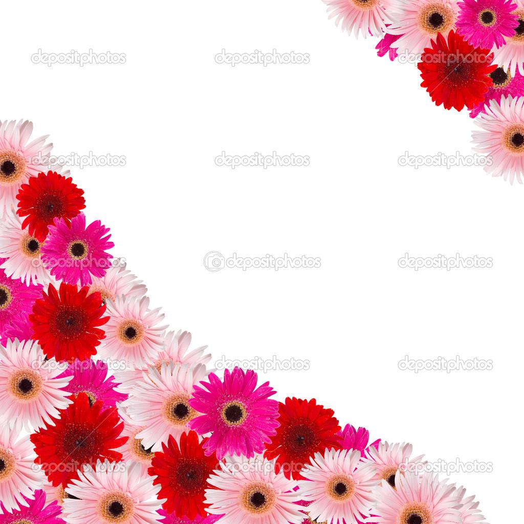 bordure de fleurs roses et rouges herbera photographie. Black Bedroom Furniture Sets. Home Design Ideas