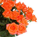 Fresh orange roses — Stock Photo