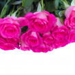 Border of fresh pink roses close up — Stock Photo #29212629